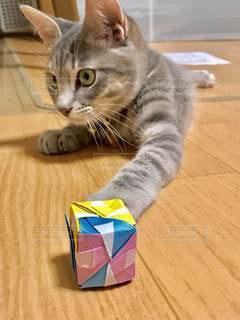 テーブルの上に座っている猫の写真・画像素材[3354208]