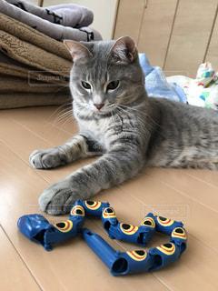 ヘビのおもちゃの写真・画像素材[3359944]