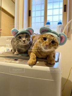 冷蔵庫の上に座っている猫の写真・画像素材[3360072]