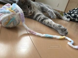 ベッドに横たわる猫の写真・画像素材[3362237]
