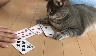 テーブルの上に横たわっている猫の写真・画像素材[3389941]