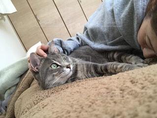 ベッドに横たわる猫の写真・画像素材[4212208]