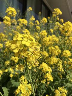 花のクローズアップの写真・画像素材[4298899]