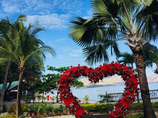 海,屋外,赤,ビーチ,景色,ハート,可愛い,ヤシの木,フィリピン,スービック島