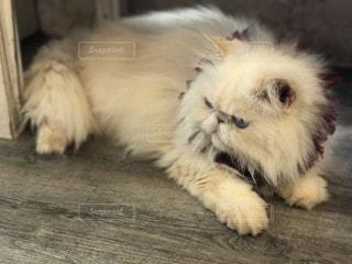 猫の写真・画像素材[2281076]