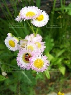 ハルジォンとてんとう虫の写真・画像素材[2265991]