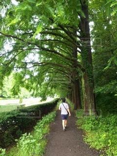並木道をお散歩の写真・画像素材[2301177]