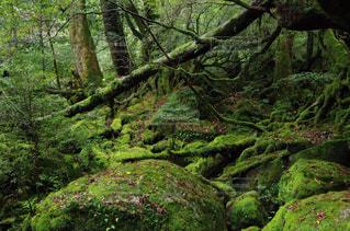苔むす森の写真・画像素材[2257376]