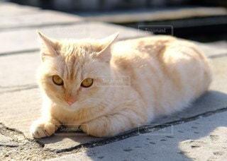 陽だまりの猫の写真・画像素材[2285448]