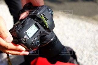 カメラにカマキリの写真・画像素材[3388158]