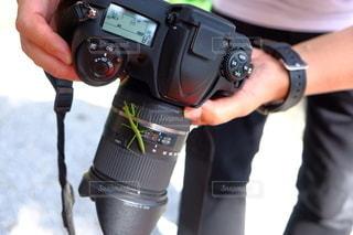 カメラにカマキリの写真・画像素材[3388156]