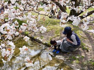 春の小川の写真・画像素材[2372410]