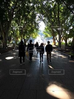 自然,オーストラリア,シドニー,7月,ワーキングホリデー