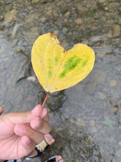 葉を持つ手の写真・画像素材[2286486]