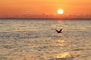 海,空,鳥,太陽,朝日,ビーチ,オレンジ,光,日の出