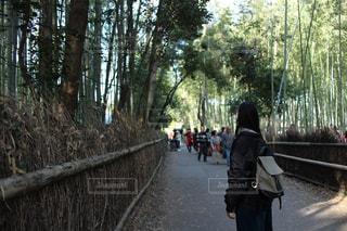 森の中の人々のグループの写真・画像素材[2266599]