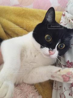 くつろぎタイムの愛猫様💓の写真・画像素材[2291521]