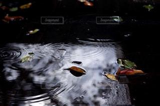 雨の写真・画像素材[2268060]