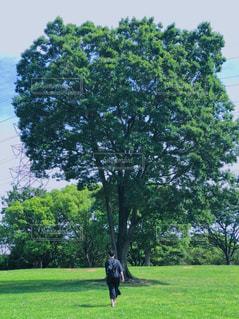 公園,木,芝生,屋外,緑,草原,雲,青空,散歩,レジャー,お散歩,ライフスタイル,おでかけ