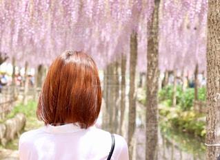 藤の花と彼女の写真・画像素材[2281382]