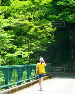 自然の中を散歩の写真・画像素材[2783616]