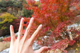 はじめての指輪の写真・画像素材[2813776]