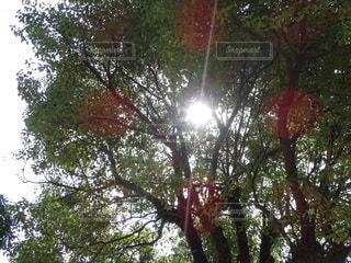 空,日光,光,樹木