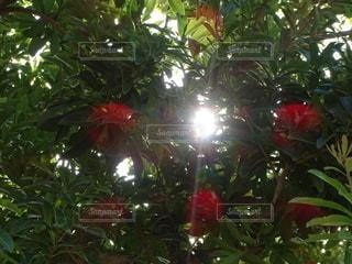花,太陽,樹木