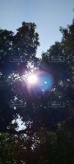 太陽,日光,光,樹木,明るい