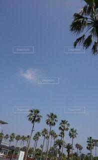 晴れた日のヤシの木の群れの写真・画像素材[2280895]