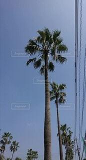 ヤシの木の写真・画像素材[2280896]