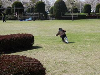 公園,屋外,晴れ,晴天,草,人,遊び場,草木