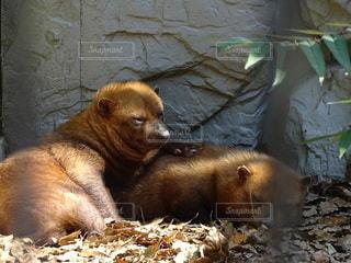 小さな可愛い動物の写真・画像素材[2322848]