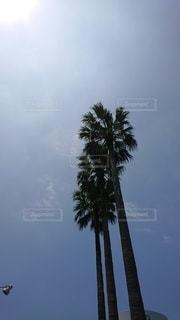 ヤシの木と青空の写真・画像素材[2415335]