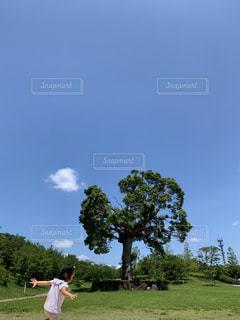 自然,公園,木,芝生,屋外,緑,かわいい,青空,散歩,女の子,少女,走る,人物,人,可愛い,幼児,レジャー,お散歩,大樹,ライフスタイル,おでかけ,キュート,3歳