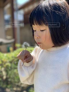 屋外,緑,白,かわいい,青空,散歩,女の子,少女,人物,人,可愛い,たんぽぽ,幼児,レジャー,綿毛,お散歩,ライフスタイル,おでかけ,3歳