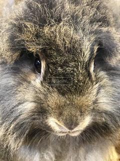 動物のクローズアップの写真・画像素材[2281267]