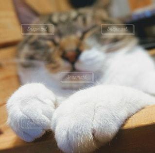 ふわふわ猫の手の写真・画像素材[2289957]