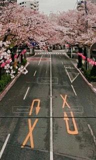 花,桜,道路,さくら