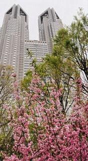 花,春,都庁,さくら
