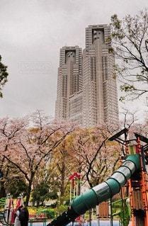 空,建物,花,桜,高層ビル,東京都庁,さくら
