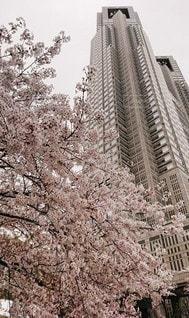 建物,花,春,タワー,さくら,ブロッサム
