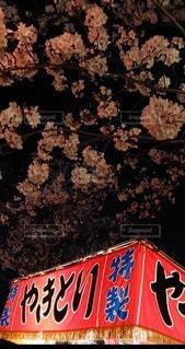 花,夜桜,さくら,桜まつり