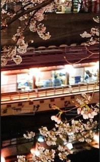 花,桜,夜桜,屋形船,さくら