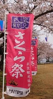 桜,さくら,さくら祭