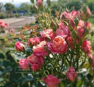 花のクローズアップの写真・画像素材[4353072]