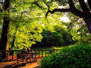 公園,森林,屋外,親子,晴れ,散歩,ベンチ,池,樹木,レジャー,野外,お散歩,ライフスタイル,おでかけ,草木,ぶらり,ガーデン