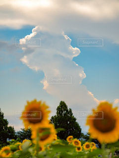 夏雲の写真・画像素材[2411515]