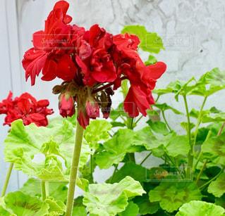 花のクローズアップの写真・画像素材[2275316]