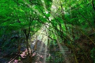 光芒の写真・画像素材[2277857]
